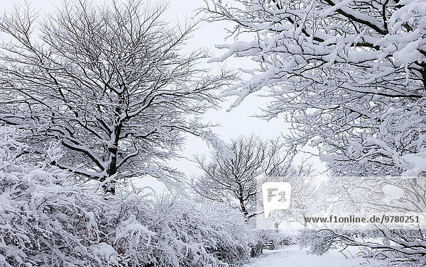 Snow covered trees in winter  Exmoor National Park  Somerset  England  United Kingdom  Europe