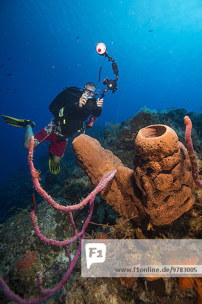 Underwater photographer with barrel sponge  Turks and Caicos  West Indies  Central America