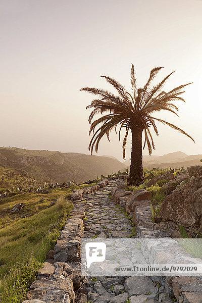 Steinweg und Palme  bei Alajero  La Gomera  Kanarische Inseln  Spanien  Europa Steinweg und Palme, bei Alajero, La Gomera, Kanarische Inseln, Spanien, Europa