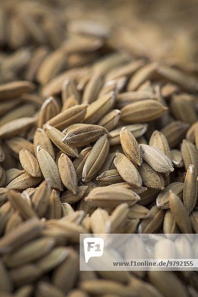 Reiskörner  Pokkali-Reis  Kerala  Indien  Asien