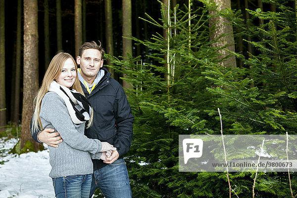 suchen Weihnachtsbaum Tannenbaum jung Vollkommenheit