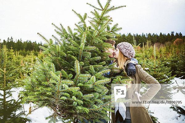 hinter Frische schneiden küssen Weihnachtsbaum Tannenbaum jung