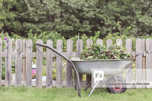 Schubkarre mit Unkraut am Zaun auf dem Bauernhof