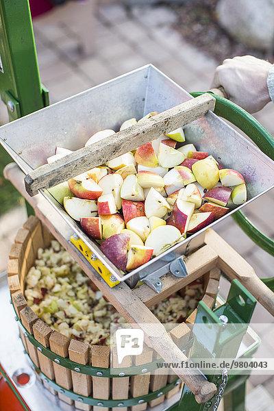 Schnittbild der Handverarbeitung von geschnittenen Äpfeln in der Apfelpresse auf dem Hof