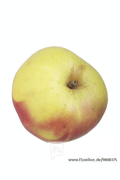Apfelsorte Lausitzer Nelkenapfel