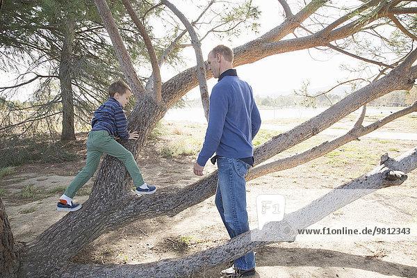 Vater beobachtet Sohn klettern Baum im Park