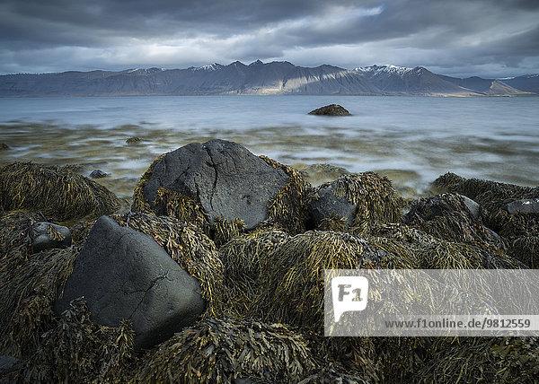Seascape from Dyrafjordur  Westfjords of Iceland