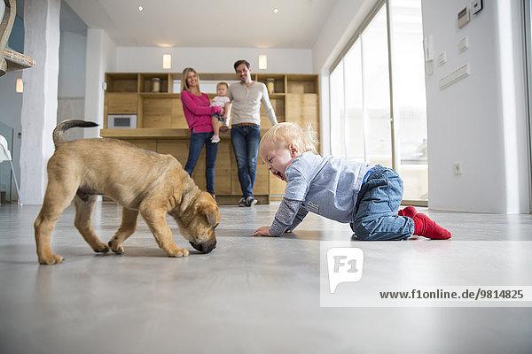 Männliches Kleinkind spielt mit Welpen auf dem Esszimmerboden