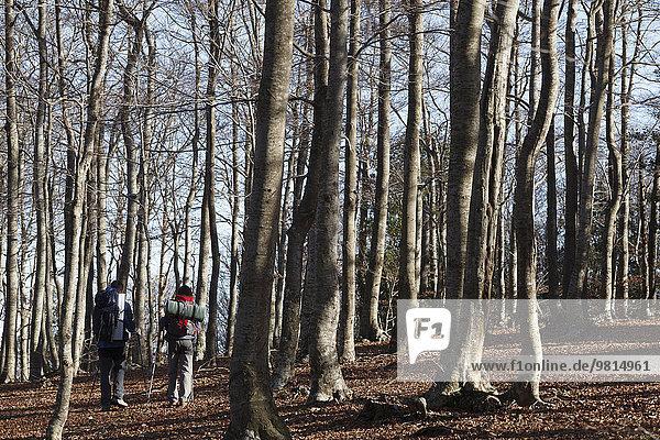 Wanderer  die durch Wälder wandern  Montseny  Barcelona  Katalonien  Spanien