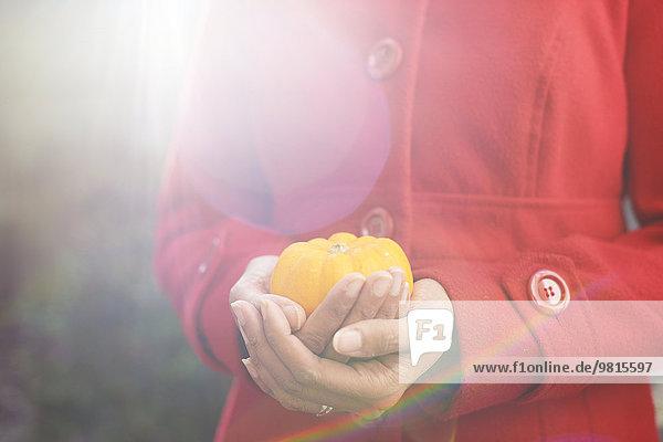 Nahaufnahme der Frauenhände beim Schröpfen des kleinen Kürbisses im Garten