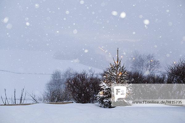 Verschneite Landschaft  Trondheim  Norwegen