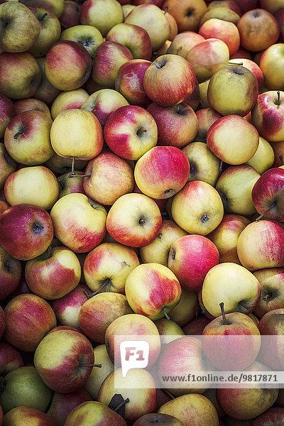 Deutschland  Niedersachsen  Hildesheim  Äpfel  Sorte Elstar  am Markt