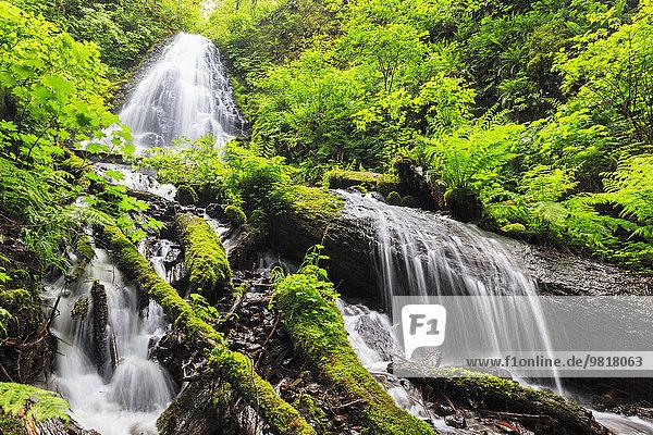 USA  Oregon  Multnomah County  Columbia River Gorge  Fairy Falls