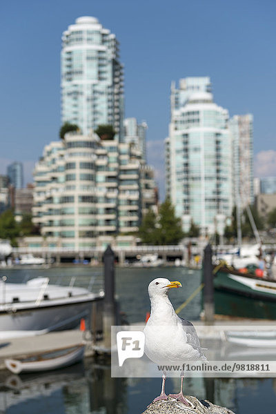 Kanada  British Columbia  Vancouver  Möwe vor Bezirk Yaletown Kanada, British Columbia, Vancouver, Möwe vor Bezirk Yaletown