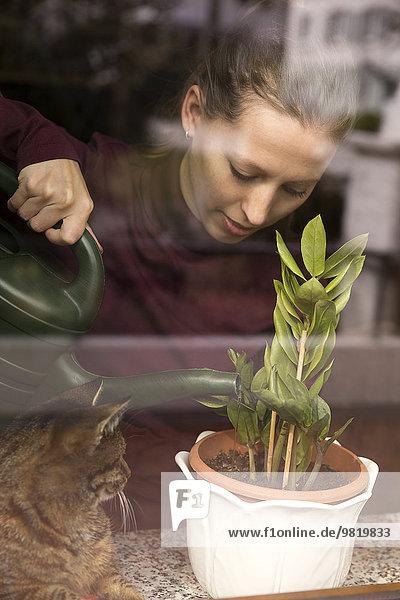 Frau mit Katzenbewässerungsanlage am Fenster