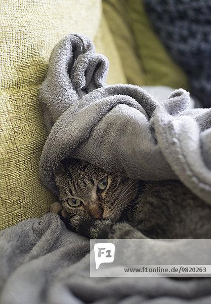 Tabby-Katze auf einem Sofa liegend