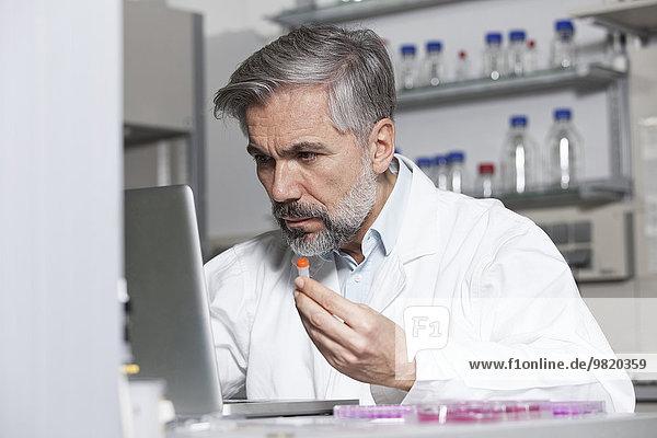 Wissenschaftler mit Testprobe am Laptop im Labor