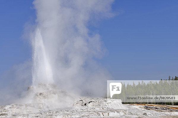 USA  Wyoming  Yellowstone Nationalpark  Castle Geyser Ausbruch