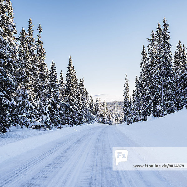 Country road at winter