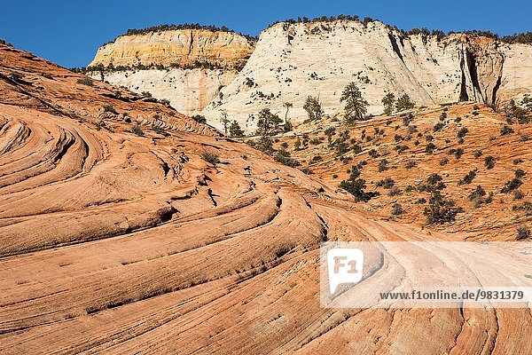 Navajo Sandstone layers seem to flow in the foreground with unique white sandstone cliffs in the background.