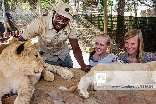 Südliches Afrika Südafrika Löwenjunges Frau Mann Angestellter Personalwesen schwarz Kommunikation Johannesburg