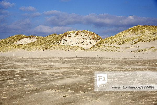 Strand  Dünen  Egmond aan Zee  Nordholland  Niederlande  Europa