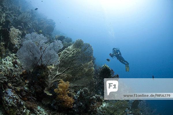 Diver in the coral reef  near Menjangan  Bali  Indonesia  Asia