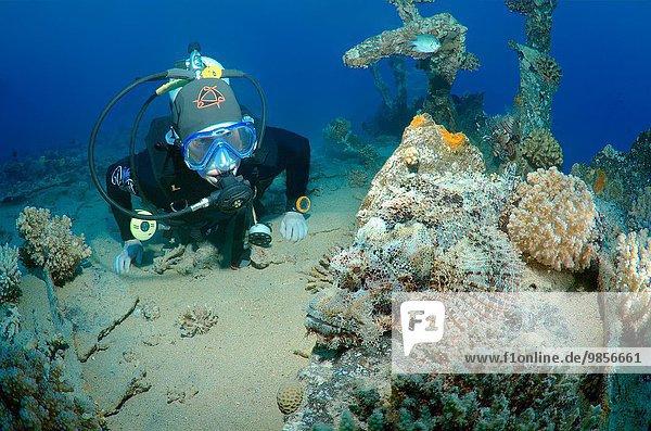 Drachenkopf Scorpaenidae sehen Afrika Ägypten Rotes Meer