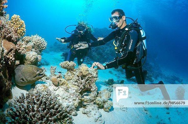 Afrika Ägypten Moray Rotes Meer