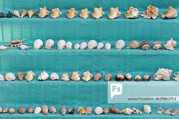Muscheln an einem Verkaufsstand  Cochin  Kochi  Kerala  Indien  Asien