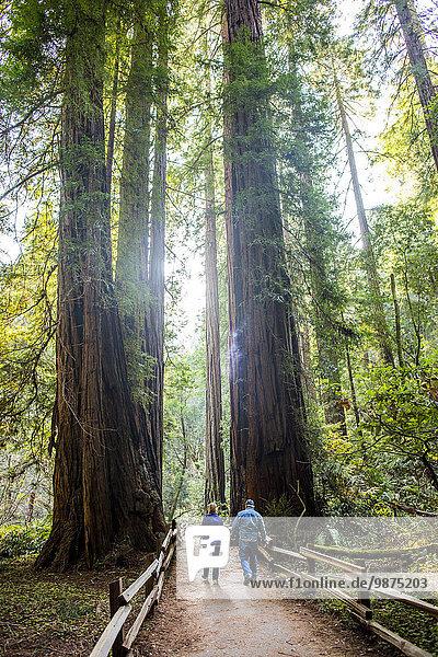 Europäer gehen Baum Weg unterhalb schmutzig groß großes großer große großen