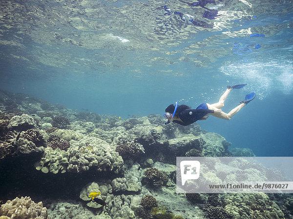 nahe Tropisch Tropen subtropisch Europäer Frau Ozean schnorcheln Riff