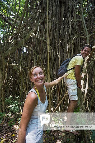 Baum Tourist wandern Tanna Insel