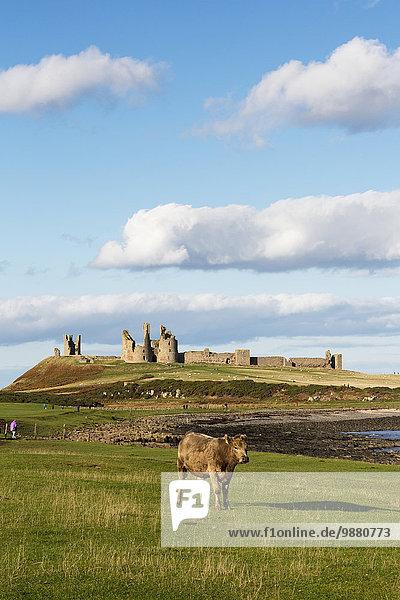'Dunstanburgh Castle; Northumberland  England'