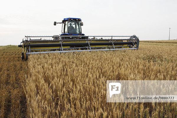 schneiden Feld Weizenfeld Alberta Kanada