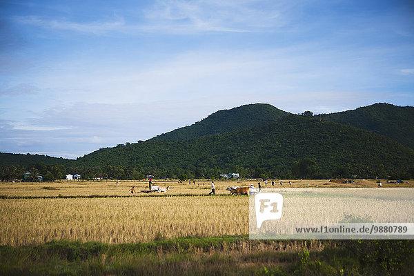 arbeiten Feld Kambodscha