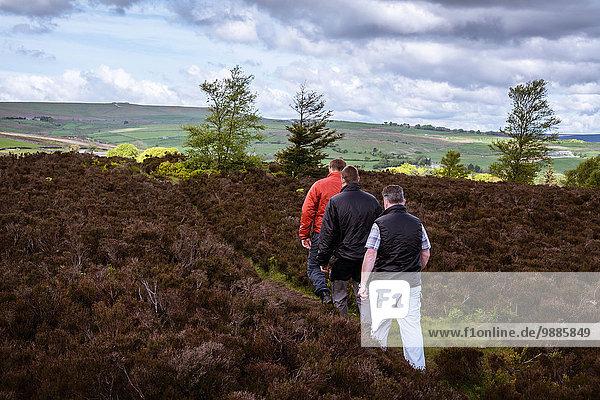 Rückansicht von männlichen Freunden beim Wandern auf Heidemoor  Pateley Bridge  Nidderdale  Yorkshire Dales