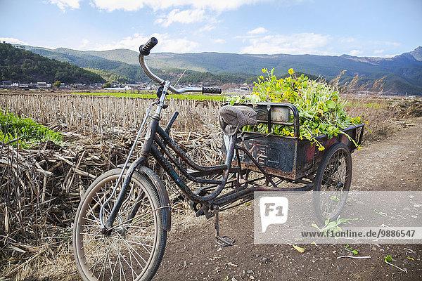 Gemüse 3 Fahrrad Rad China Lijiang