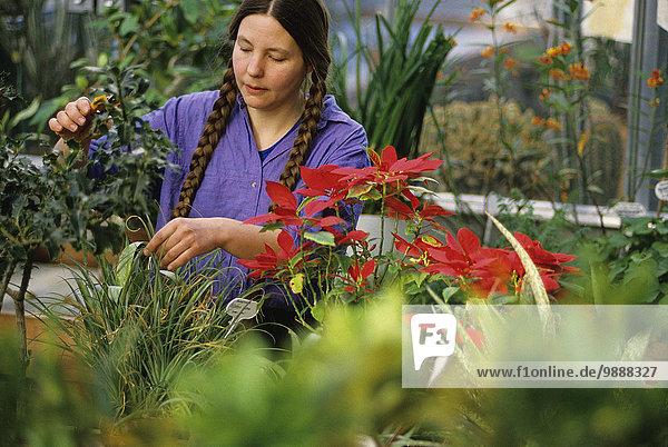 Vereinigte Staaten von Amerika USA Landwirtschaft Pflanze Gartenbau Fürsorglichkeit Botaniker Botanik Treibhaus Universität