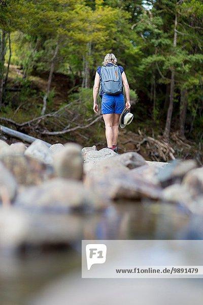 Wanderer zwischen Steinen im flachen Bach  Waima Forest  Nordinsel  NZ