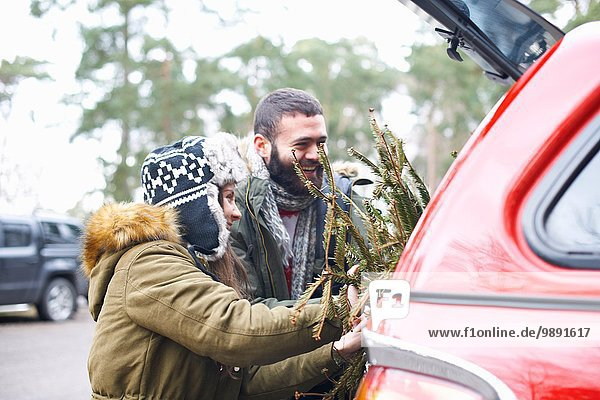 Young couple with Christmas tree into car boot