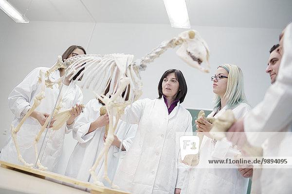 sehen Tier Klassenzimmer Schule (Einrichtung) Student Wissenschaft