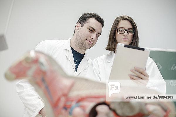 Modell lernen Klassenzimmer Student Anatomie Wissenschaft
