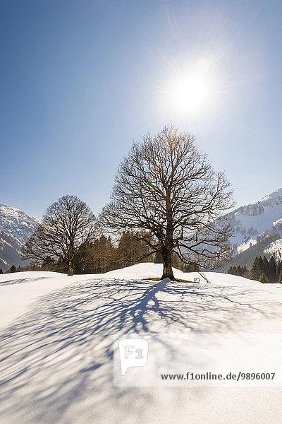 Germany  Bavaria  Allgaeu  bare trees in winter in backlight