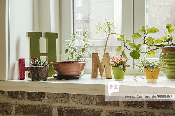 Fensterbank mit Pflanzen und Buchstaben H und M