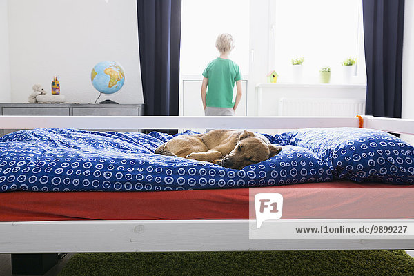 Dog lying on bed with boy in background