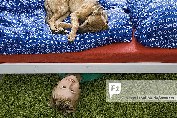 Hund auf dem Bett liegend mit Junge darunter