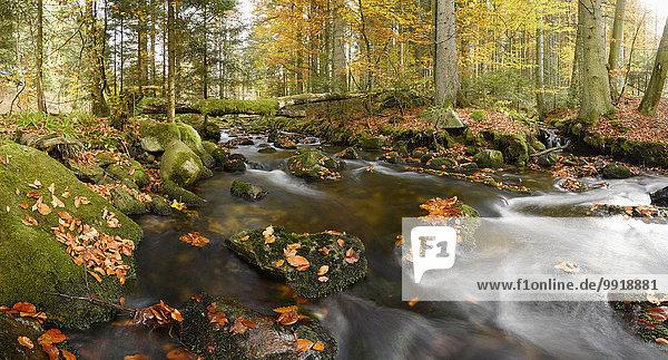 Landschaft Wald fließen Herbst Bayern Deutschland Nationalpark Bayerischer Wald