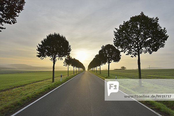 Morgen Baum Fernverkehrsstraße Deutschland Rheinland-Pfalz Morgen,Baum,Fernverkehrsstraße,Deutschland,Rheinland-Pfalz
