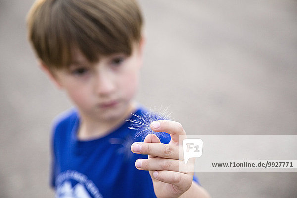 Boy (6-7) holding dandelion seed